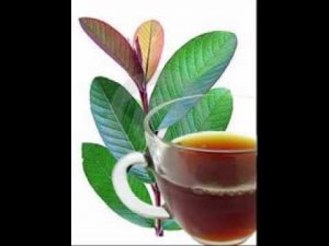Benefits of guava leaves